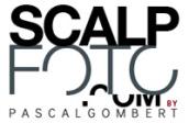 logo-scalp mini